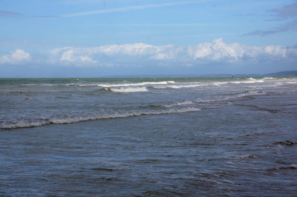 ssaki-odwiedzaja-morze-baltyckie