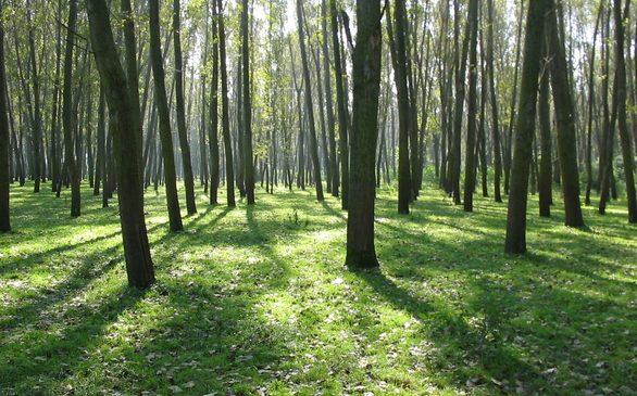 Polacy-moga-spedzic-urlop-w-lesie